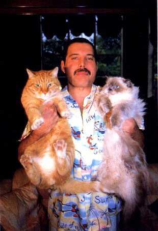 Freddie Mercury loved his cats.